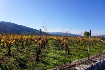 UNESCO-recognized Stari Grad Plain, Hvar, Croatia